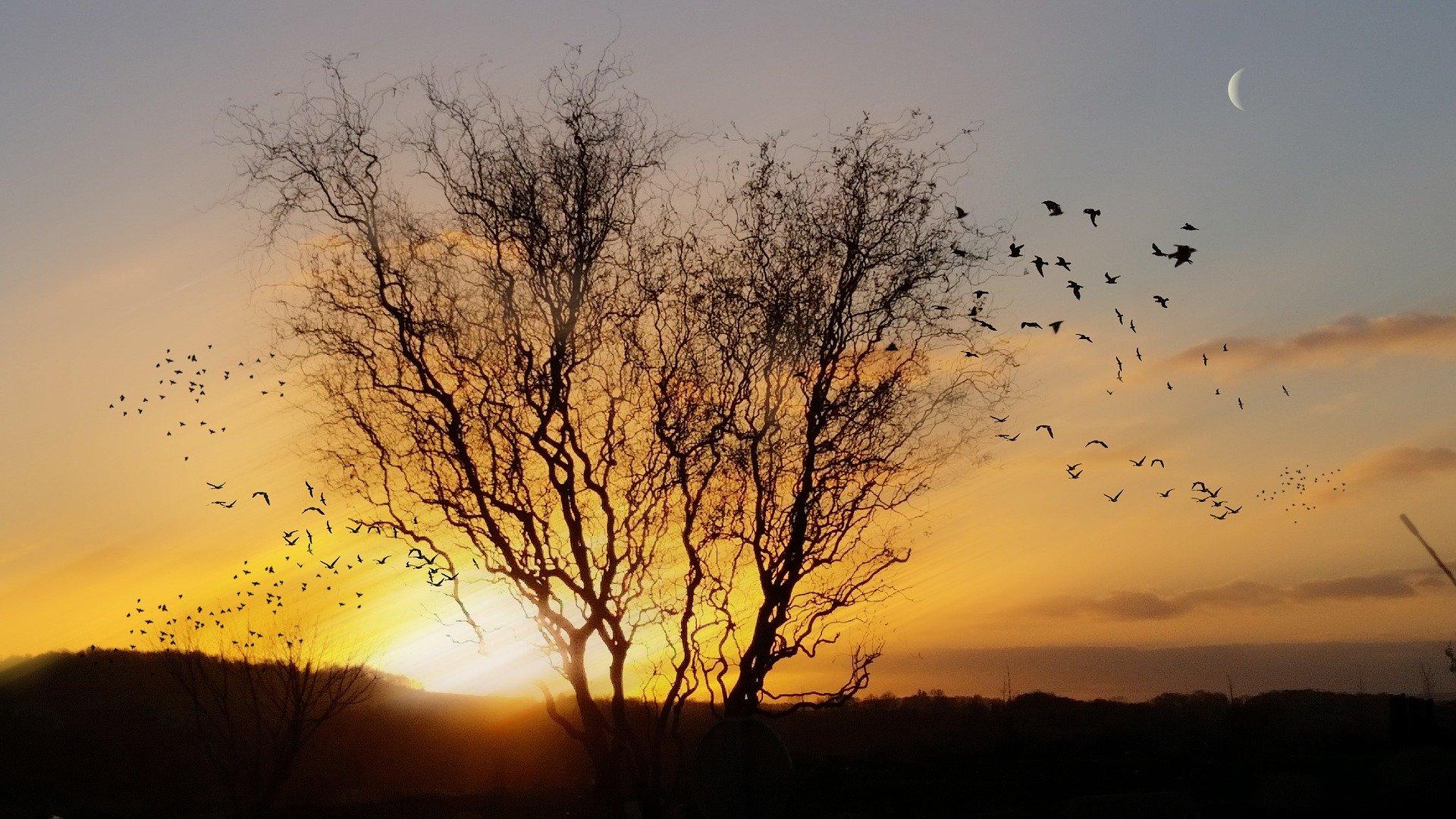 Envolée d'oiseaux